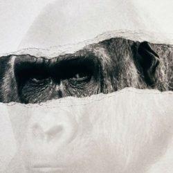 Հինգ կապիկ. </br> որի՞ նման ես մտածում դու